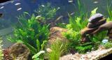 Туф (лава) для аквариума